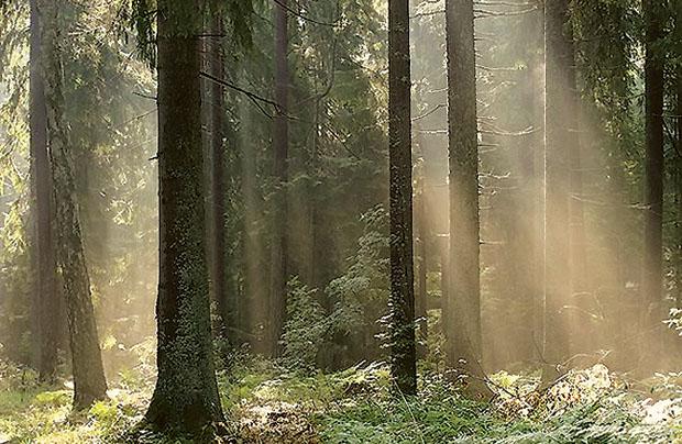 Podlasie – kraina magiczna. Część IV. Dzikie knieje, moczary i papież na kajaku