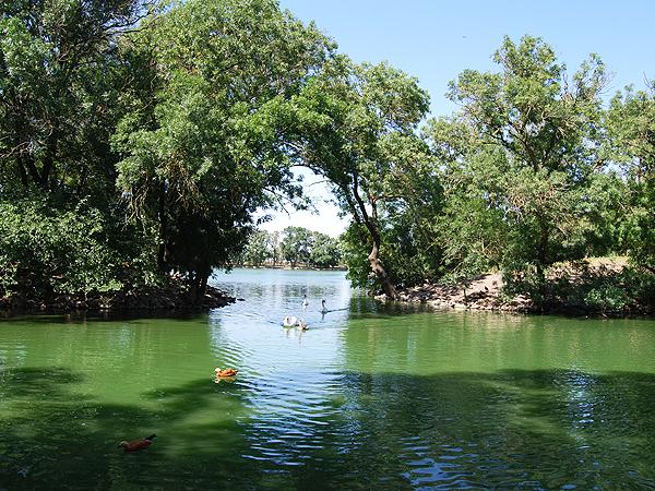 Sztuczna oaza w Nowej Askanii (Fot. Konstanty Czawaga)