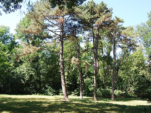 Las w bezwodnym stepie (Fot. Konstanty Czawaga)