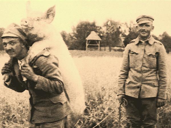 Ulubione zwierzę żołnierza