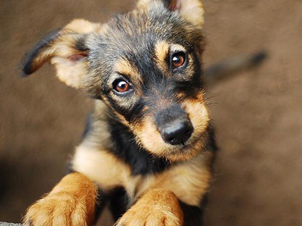 Ratujmy bezdomne zwierzęta