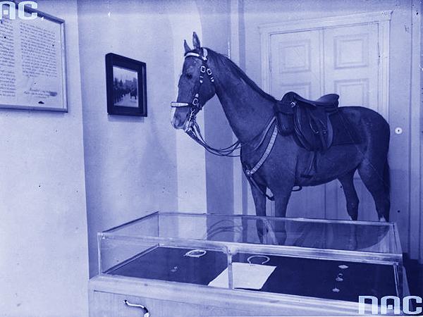 Kasztanka – koń Marszałka Piłsudskiego (Fot. NAC)