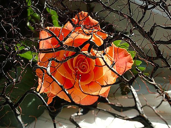 Gdy ktoś kocha różę