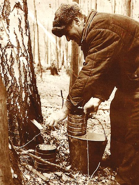 Zbieranie soku brzozowego jest na Wołyniu powszechne (Fot. Łukasz Giersz)