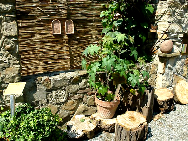 Kolekcja roślin biblijnych (Fot. bolestraszyce.com)