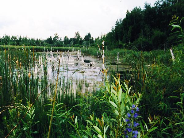 Głuche ostępy tajgi to siedlisko niezliczonych owadów, wielu gatunków roślin i zwierząt, a także... (Fot. Wojciech Grzelak)