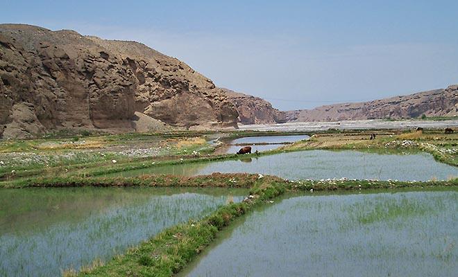 Pola ryżowe w okolicach Batken (Fot. Maria Kowalska)